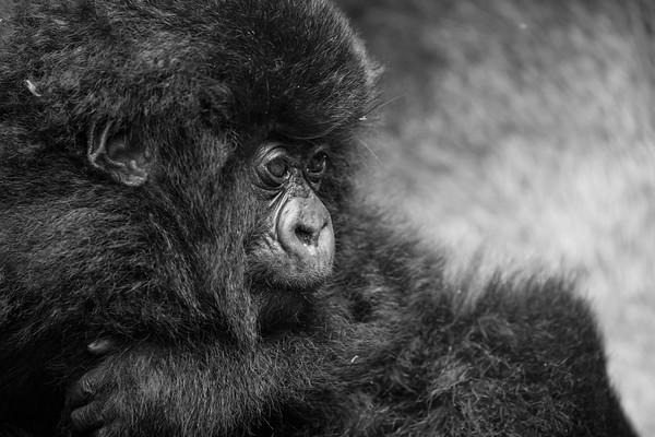 Virunga's Gorilla Protectors