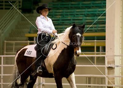 Colorado Mustang Days Pleasure Class 3.7.14