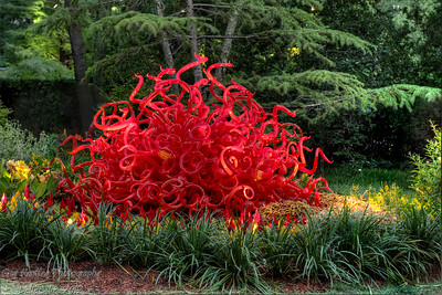 Chihuly at night
