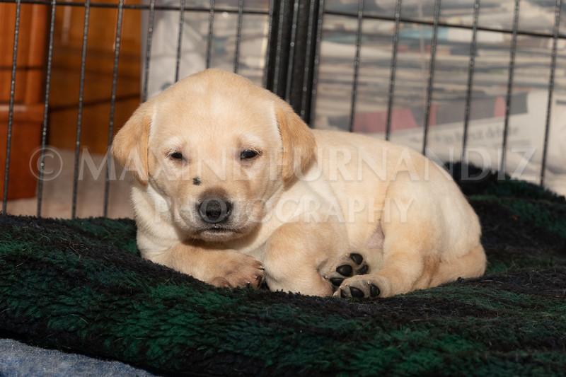 Weika Puppies 2 Mar 2019-8511.jpg