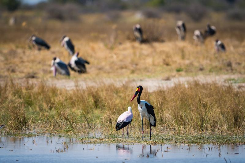 Botswana_June_2017 (596 of 6179).jpg