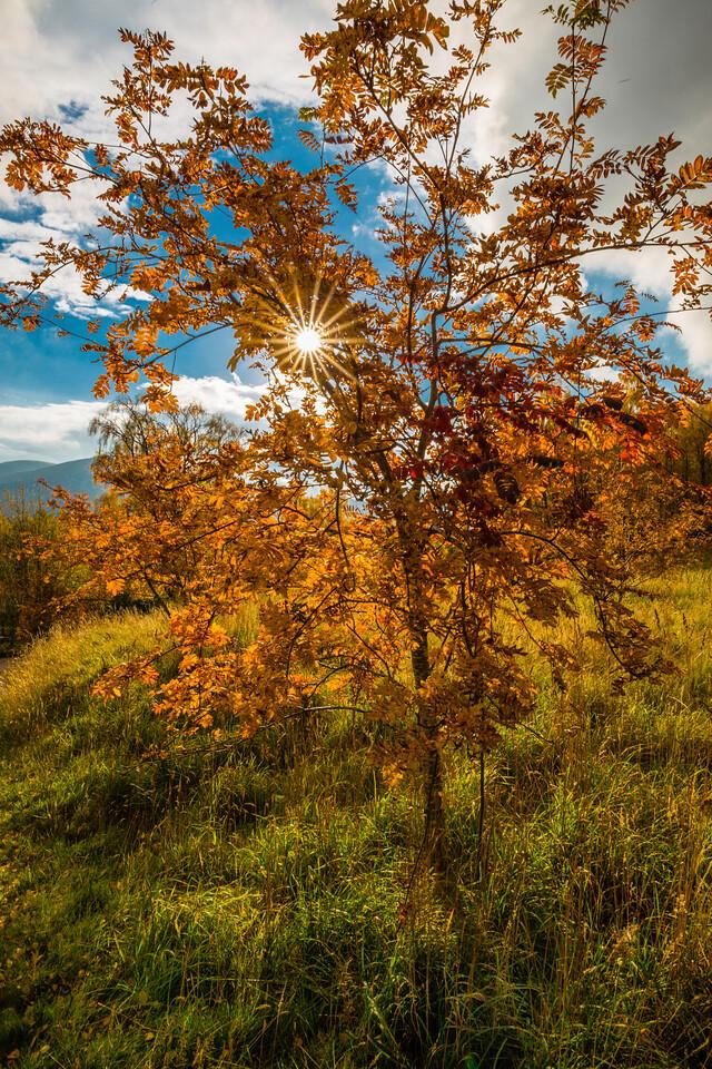 Autumn Sun Burst