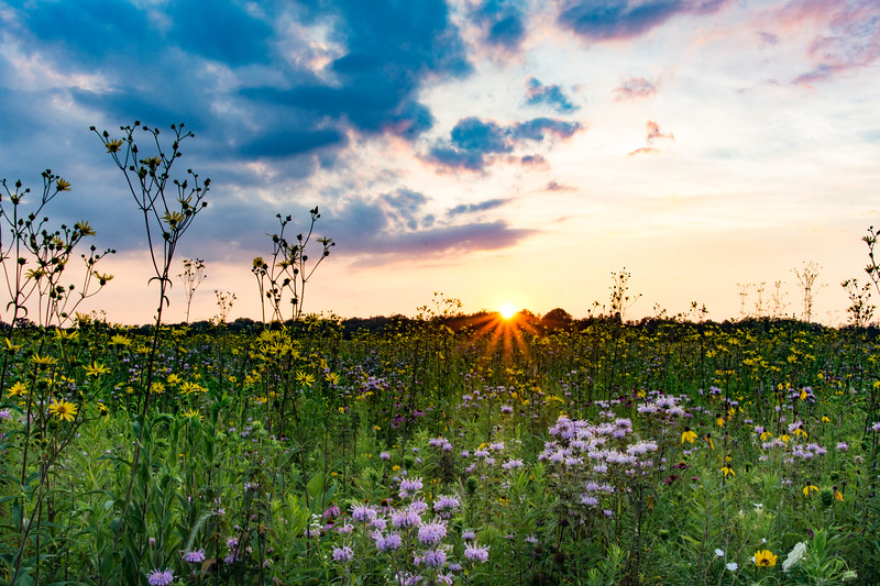 SFBog-sunset-July.jpg