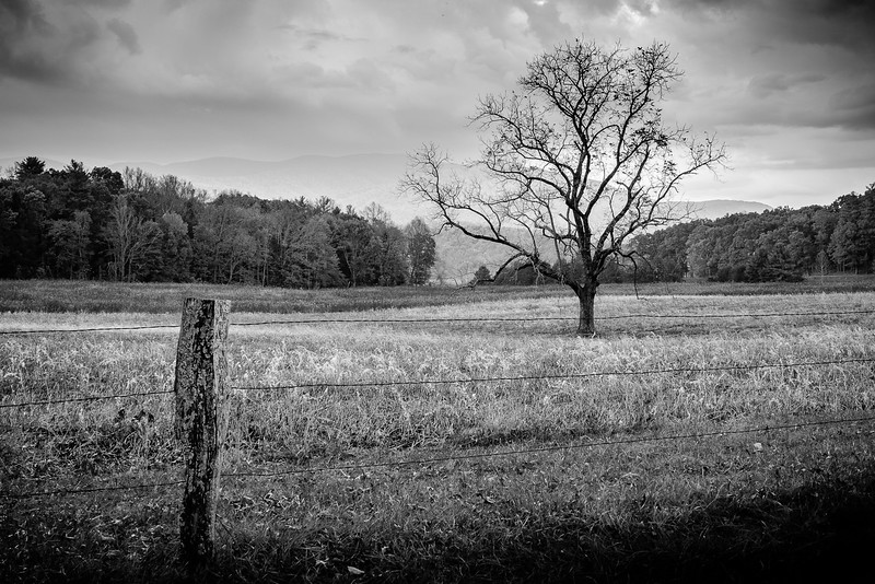 Nature Scenes in the Autumn in Cades Cove in Great Smoky Moutains National Park