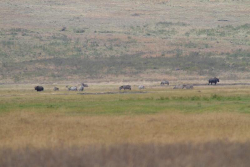 Long Range Rhinos.JPG