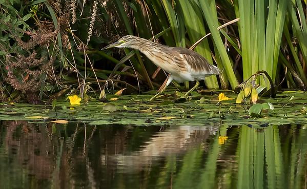 UK Rare/Scarce Birds 2012-2021