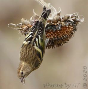Birding 2020 October