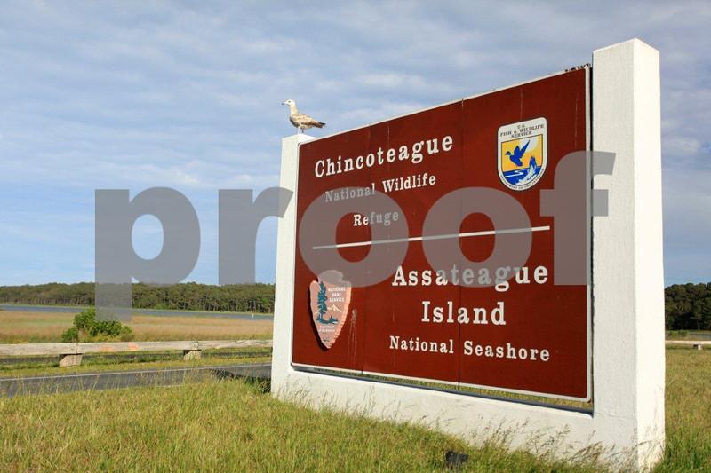 Chincoteague National Wildlife Refuge, Assategue Island