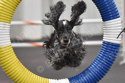 TMAC AKC Agility Trial, February 24-25, 2018