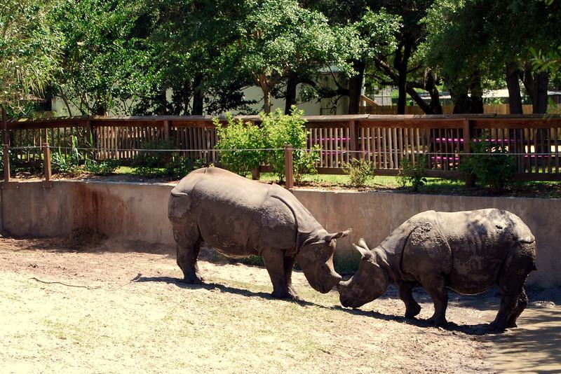 2014 Zoo in Sanford, Florida (14).JPG