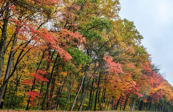 Fall Colors in NE PA, 10-12-20 (X-T4)