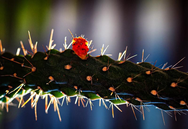 Cactus 091319--2.jpg