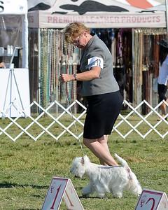 Santa Ana Kennel Club - Groups on Sunday