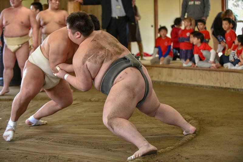 Gr.2 Nodai Sumo-1108.jpg
