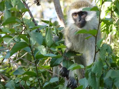Kenya - Wildlife