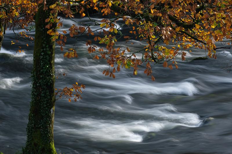 River Brathay Autumn