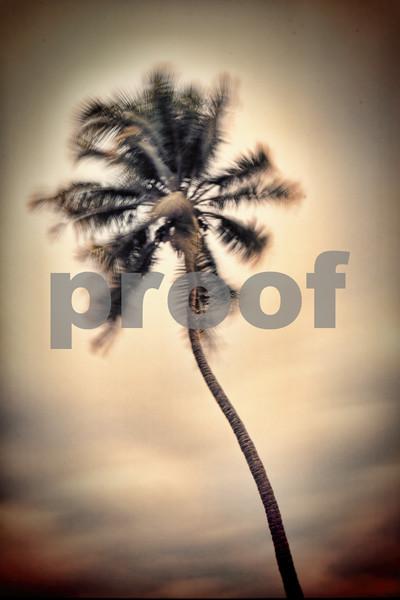 Palm Tree Life.jpg