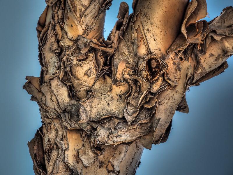 June 7 - Tree bark.jpg