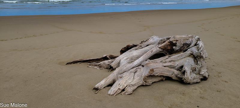 04-22-2021  Part 2 Nehalem Beach-17.jpg