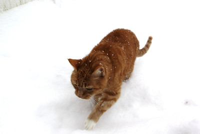 Lucky, My Cat, Snow, Dutch Hill, Tamaqua (12-29-2012)