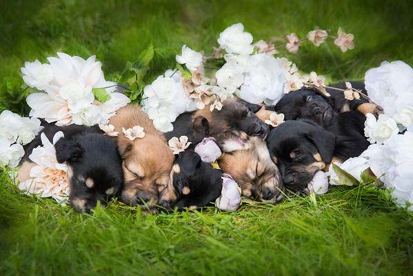 D Puppies