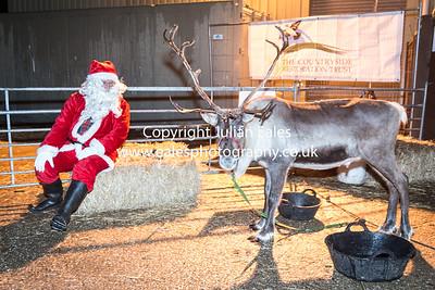 CRT Reindeer Evening Bury Farm 2014