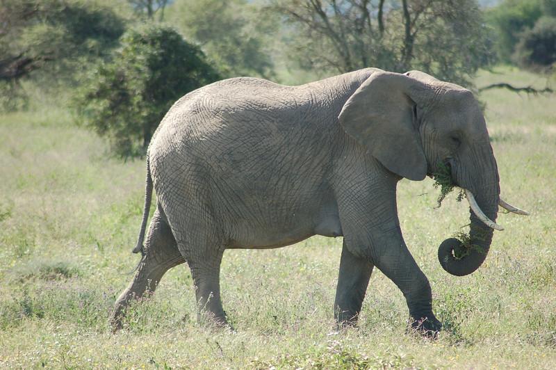 elephant multitasking.JPG