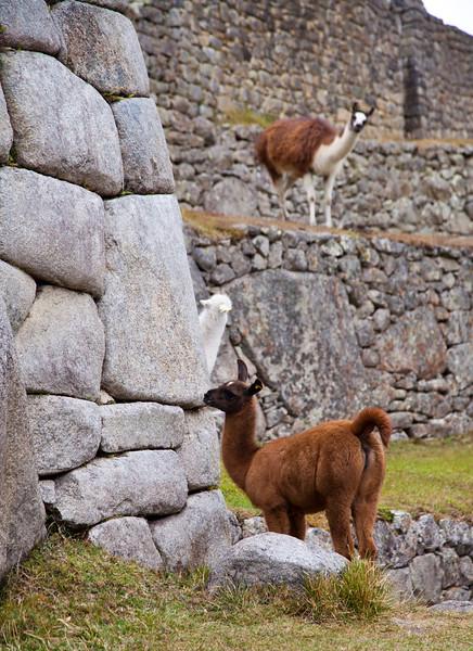 Peru_308.jpg