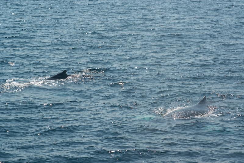 humpbacks-4119.jpg