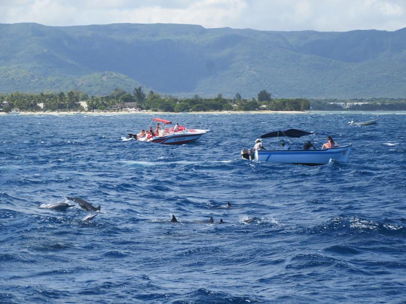 030_The West Coast. Sail the Dolphin Coast.JPG