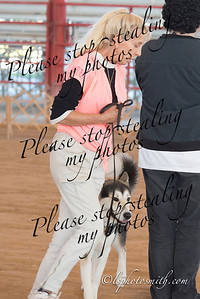 Dog Club of Hollywood Obedience 2014