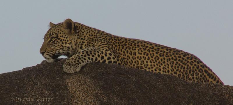 Leopard Rock W.jpg