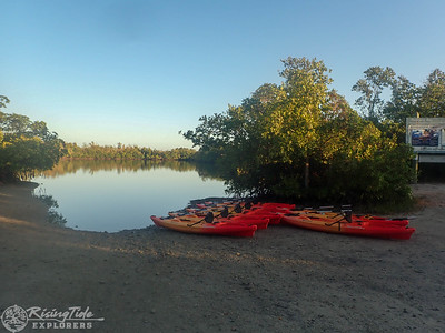 9AM Heart of Rookery Bay Kayak Tour - McEwan & Kimball