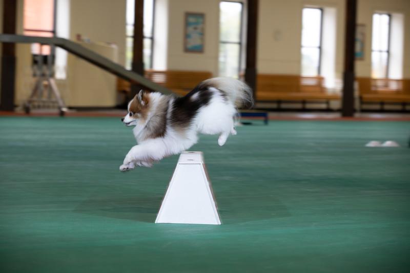 SPCA_Agility-17.jpg