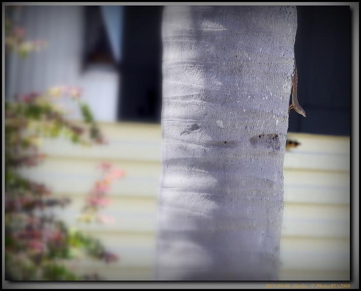 2013-09-09...Gecko...© PhotosRUs2008