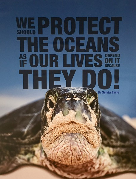 We protect the oceans.jpeg