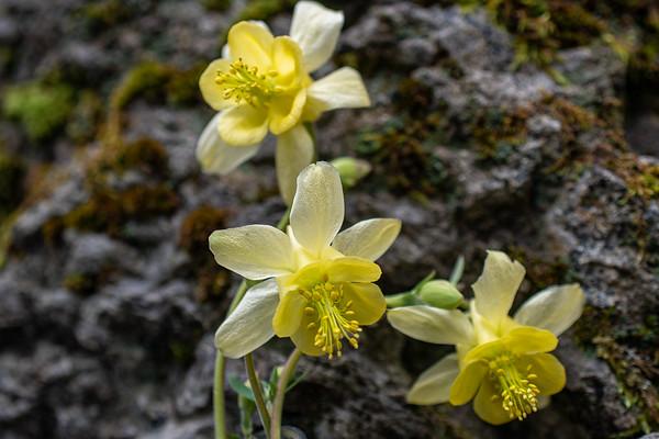 7-9-20 D6 Wild Flowers KC