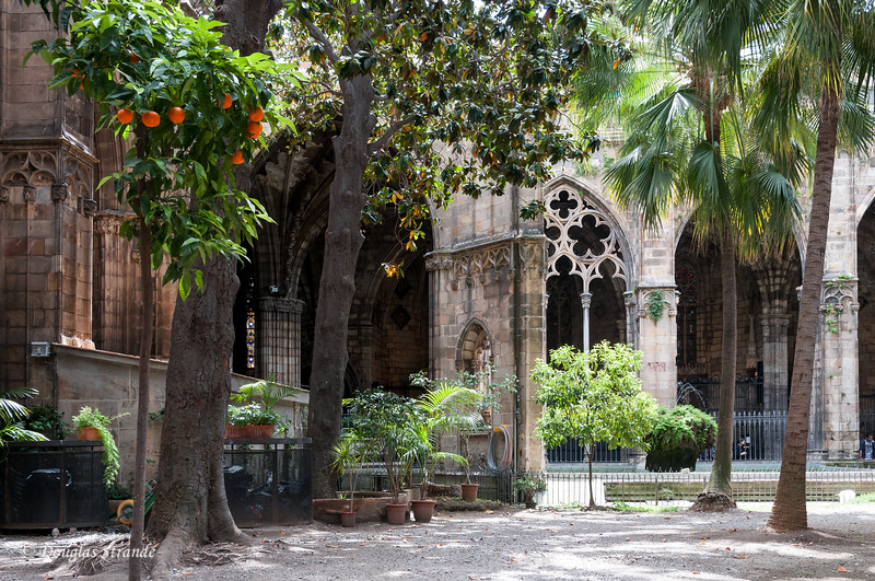 Barcelona: Cathedral Courtyard