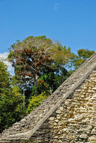 Tikal - March '11-10.jpg