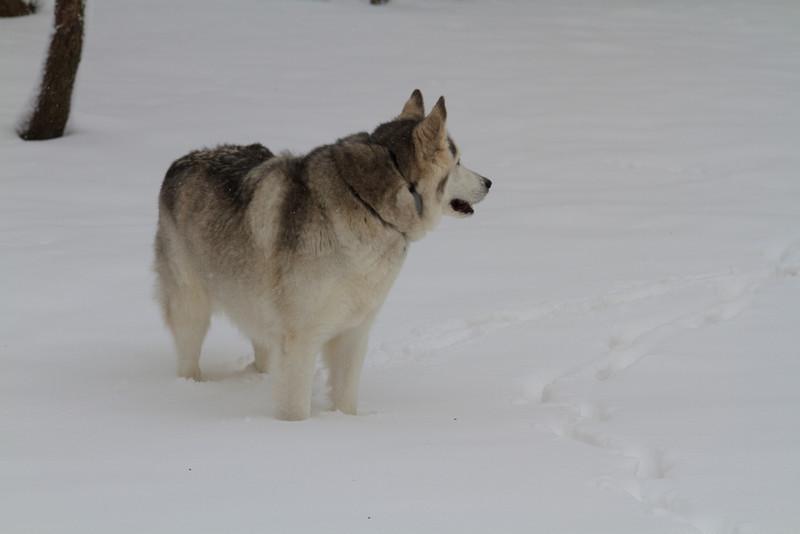 Blue Loves the Snow