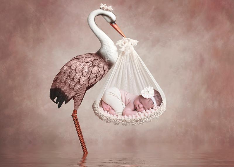 McDaniel Bird.jpg
