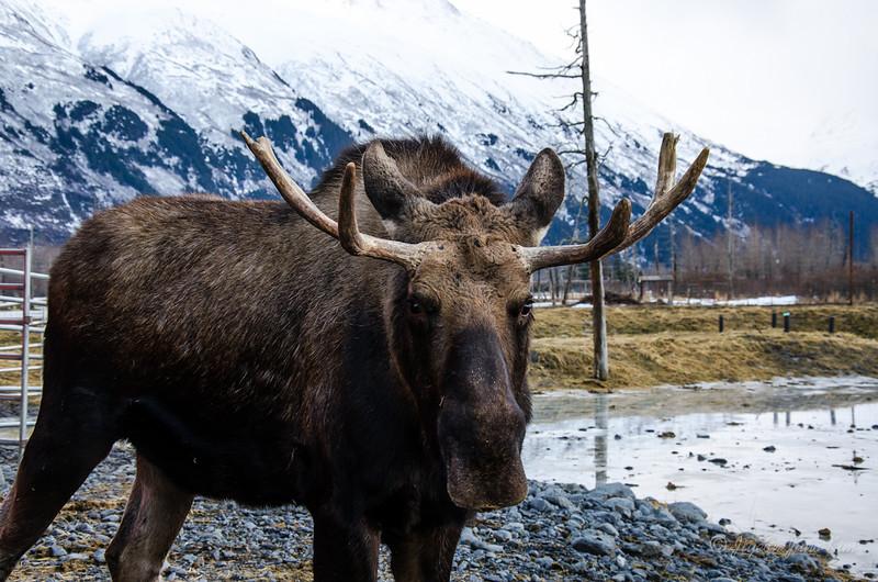 USA-Alaska-Alyeska-0301.jpg