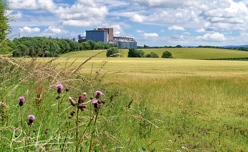 Pencaitland: Field upon field of barley ready for malting