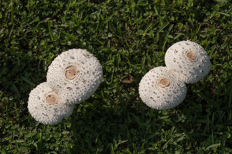 Mushrooms 1703032285.jpg
