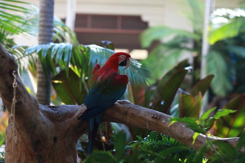 Kauai_D5_AM 203.jpg