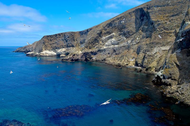 Elephant Seal Cove