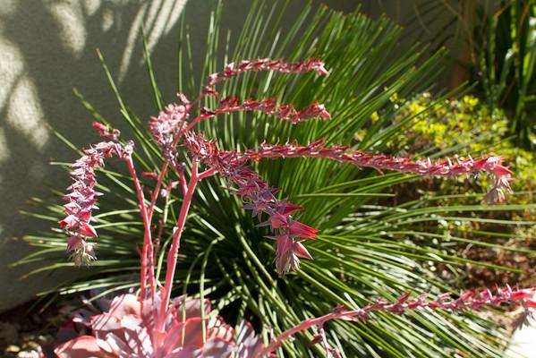 Summers end garden 9-16-2012
