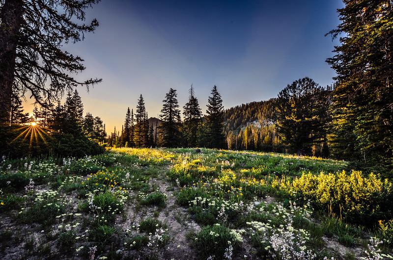 White-Pine-Lake-20140723-297.jpg
