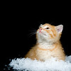 A kitten sitting in a pile of fake snow on a black background