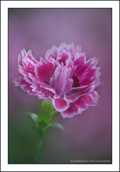 Rohrbaugh Photography Flowers 66.jpg